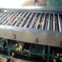 Onion Grading Machine Manufacturers