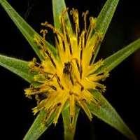 Hybrid Plant Manufacturers