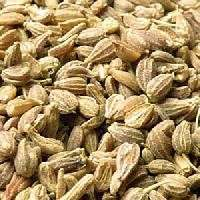 Herbal Seeds Manufacturers