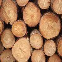 松树原木 制造商