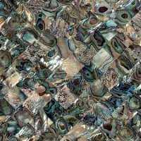 Abalone Shell Tiles Manufacturers