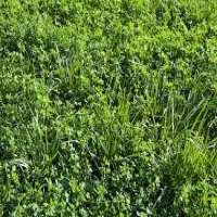 Alfalfa Grass Manufacturers