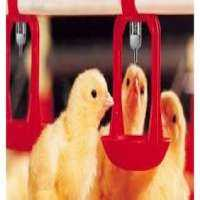 Poultry Nipple Drinker System Manufacturers