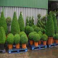 Topiary Plants Manufacturers