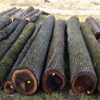 Walnut Wood Logs Manufacturers