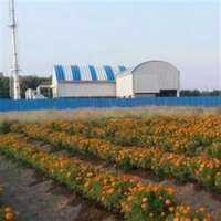 Jaggery Plant Manufacturers