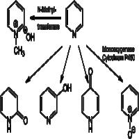 吡啶衍生物 制造商