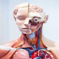 Anatomical Models Manufacturers