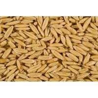 Oat Seeds Manufacturers