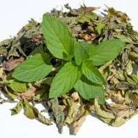 Dehydrated Mint Leaves Manufacturers