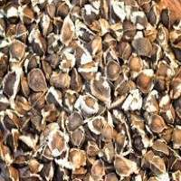 Moringa Seeds Manufacturers