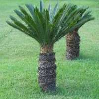 Outdoor Plant Manufacturers