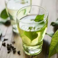 Green Tea Drinks Importers