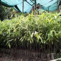 Agar Plant Manufacturers