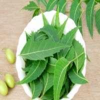 Sage Herb Manufacturers