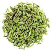 Fennel Herb Manufacturers