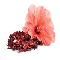 Hibiscus Extract Manufacturers