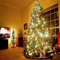 圣诞树 制造商