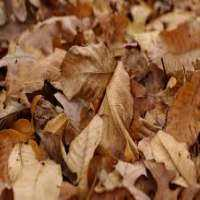 Dry Leaves Manufacturers