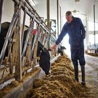 Cattle Feed Supplement Manufacturers