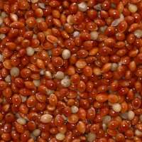 Red Millet Manufacturers