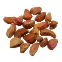 Rose Seeds Importers