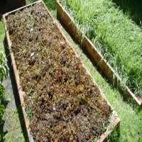 Seaweed Fertilizer Manufacturers