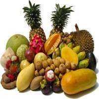 热带水果 制造商