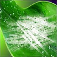 Menthol Flakes Manufacturers