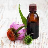 Echinacea Extract Manufacturers