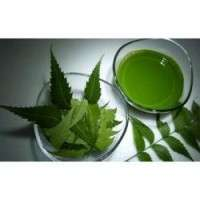 Neem Extracts Manufacturers