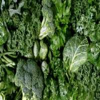 植物蛋白 制造商