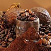 Cocoa Extract Manufacturers