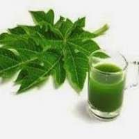 Papaya Leaf Extract Manufacturers