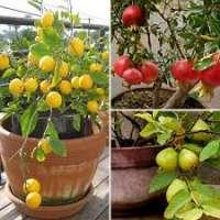Fruit Plants Manufacturers