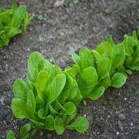 蔬菜幼苗 制造商