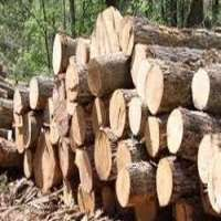 Gmelina Logs Manufacturers