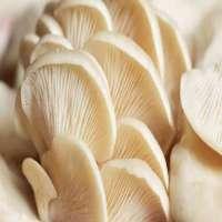 Oyster Mushroom Manufacturers