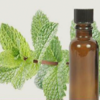 Mentha Citrata Oil Manufacturers