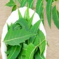 Neem Leaves Manufacturers
