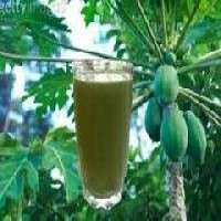 Carica Papaya Extract Manufacturers
