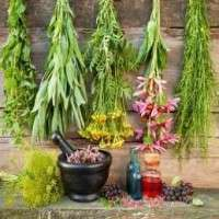 Medicinal Herbs Importers