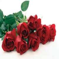 Dutch Roses Manufacturers