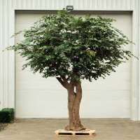 Artificial Trees Manufacturers