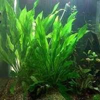 Aquatic Plants Manufacturers