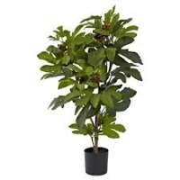 Fig Plant Manufacturers