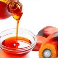 Crude Palm Oil Manufacturers