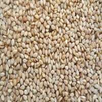 Sesame Seed Manufacturers