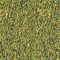 Green Millet Manufacturers