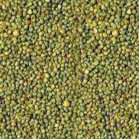 Green Millet Manufacturers